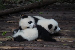 How to Save & Read a Pandas Dataframe Containing Lists and Dictionaries