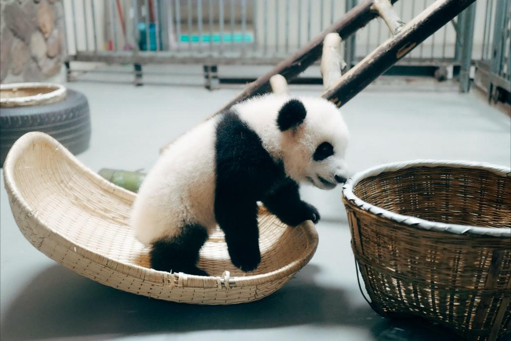pandas_cleaning